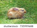 red little rabbit on green grass | Shutterstock . vector #735999688