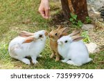 Stock photo the child feeds rabbits in the petting zoo 735999706