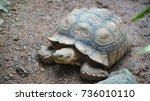 sulcata tortoise in the zoo | Shutterstock . vector #736010110