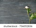 white peony flower on grey... | Shutterstock . vector #736052836