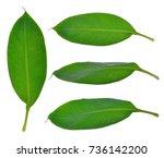 banana leaves isolated on... | Shutterstock . vector #736142200