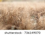 closeup of wet grass in the... | Shutterstock . vector #736149070