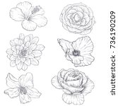 set of vector drawing flowers ... | Shutterstock .eps vector #736190209
