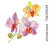 watercolor hand drawn orchid... | Shutterstock . vector #736190269