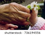 the old grandmother gives the...   Shutterstock . vector #736194556