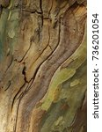 Small photo of Sycamore bark textured background. Colorful saturated bark. Platanus occidentalis. Plane tree. Platan