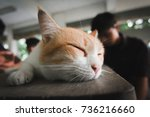 sleeping cat | Shutterstock . vector #736216660
