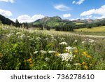 flowers in meadow at county... | Shutterstock . vector #736278610