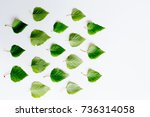 leaves with globe | Shutterstock . vector #736314058