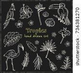hand drawn doodle  tropics set. ... | Shutterstock .eps vector #736381270