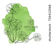 watercolor background with gotu ...   Shutterstock .eps vector #736412068