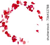 Stock photo rose petals fall to the floor isolated background blurred background of rose petals 736412788