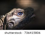 the head of the lizard is close ... | Shutterstock . vector #736415806