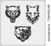 set of animals. bear  wolf and...