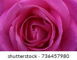 The Rose With The Name Eliza I...
