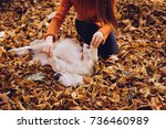 Stock photo a girl in an orange sweater is playing with her dog on fallen leaves autumn weather golden autumn 736460989