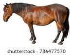 animal.   Shutterstock . vector #736477570