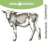 breeding cow. animal husbandry. ... | Shutterstock .eps vector #736594429