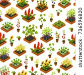 plant  vegetables  fruits and... | Shutterstock .eps vector #736596820