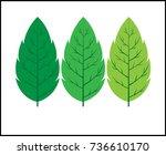 green leaves icon design.... | Shutterstock .eps vector #736610170
