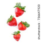 strawberries isolated on white... | Shutterstock . vector #736647520