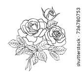 rose sketch. black outline on... | Shutterstock .eps vector #736780753