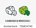 green cabbage and broccoli... | Shutterstock .eps vector #736814740
