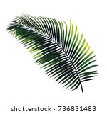 vector palm leaf isolated on... | Shutterstock .eps vector #736831483
