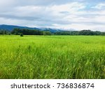 rice and mountains | Shutterstock . vector #736836874