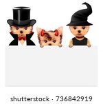 funny cartoon animal dracula ... | Shutterstock . vector #736842919