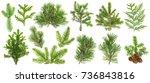 Evergreen Coniferous Tree...