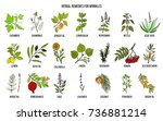 best herbal remedies for... | Shutterstock .eps vector #736881214