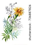 watercolor hand drawn painting... | Shutterstock . vector #736887826