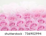 bunch of beautiful pink roses... | Shutterstock . vector #736902994