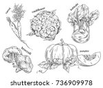 sketch of carrot and... | Shutterstock .eps vector #736909978