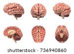 human brain 3d rendering... | Shutterstock . vector #736940860