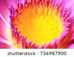 beautiful of super macro or... | Shutterstock . vector #736987900