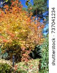 viburnum | Shutterstock . vector #737041234