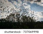 sparrow   Shutterstock . vector #737069998