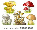 set of forest mushrooms. vector ... | Shutterstock .eps vector #737095909