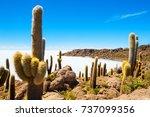 big cactus on incahuasi island  ... | Shutterstock . vector #737099356