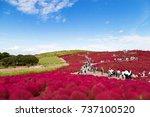 hitachi seaside park  ibaraki ... | Shutterstock . vector #737100520