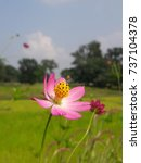 Small photo of Pink wild flower