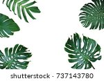 tropical leaves nature frame...   Shutterstock . vector #737143780