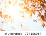multi colored tree leaves over...   Shutterstock . vector #737166064