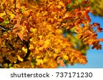 the autumn foliage