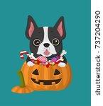 icon dog breed french bulldog.... | Shutterstock .eps vector #737204290
