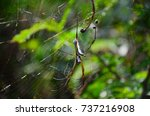 a large spider waits for prey... | Shutterstock . vector #737216908
