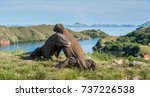 the fight of komodo dragons ... | Shutterstock . vector #737226538
