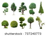 Stock photo tako trees bending isolated tree on white background the collection of trees 737240773